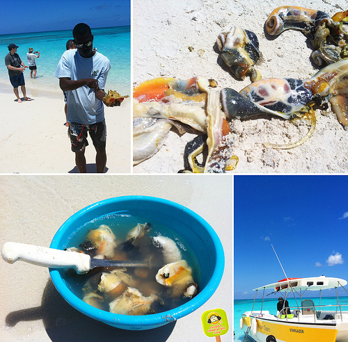conch-tasting-in-turks-and-caicos-11