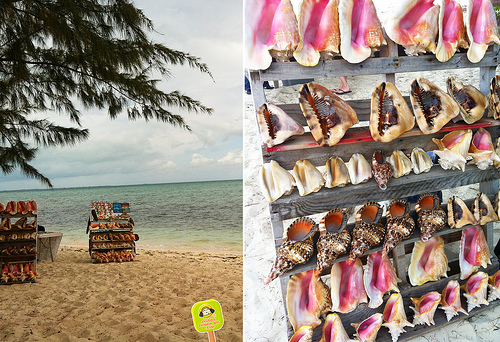 conch-tasting-in-turks-and-caicos-28